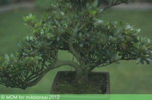 west london bonsai