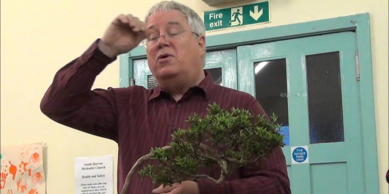 Satsuki Azalea Bonsai Lecture Part 2 Care Maintenance Feeding Pruning Seasonal Work Styling Mikbonsai Trees South West London