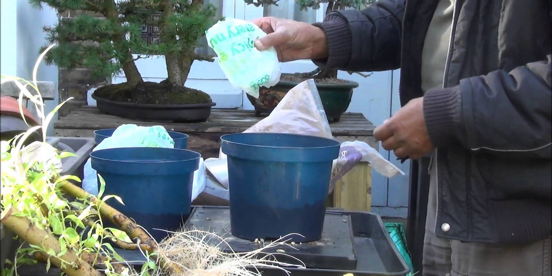 How To Grow Bonsai Trees From Branch Cuttings How To Bonsai Weeping Willow Trees Part 1 Mikbonsai Trees South West London